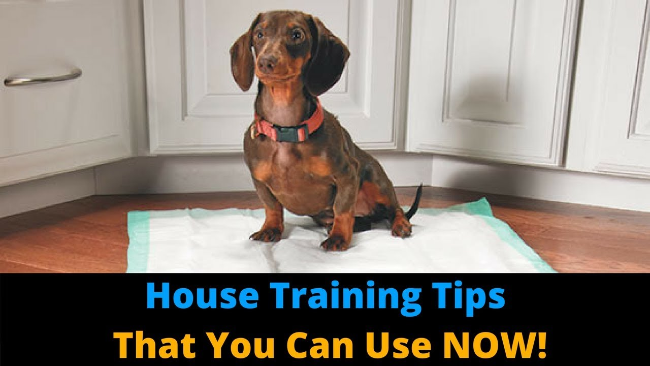 3 Tips To Make House Training Your Dog FASTER! Potty Train Your Dog ... | How Do You Potty Train A Dog