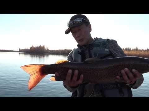 Рыбалка на притоке