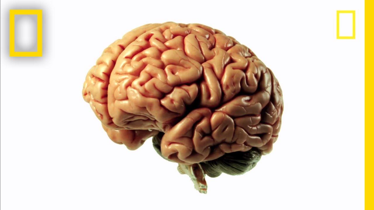 Brainworks - Mind-Bending Science! | Brain Games - YouTube