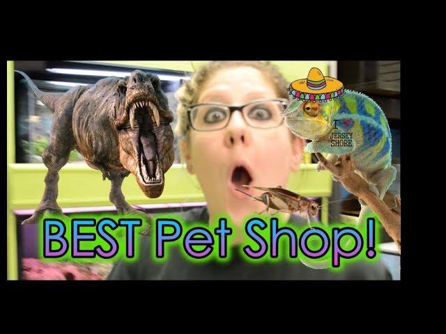 Nj Exotics Episode 1 Best Pet Shop Ever Meet The Crew Youtube