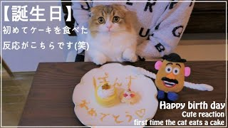 【誕生日】初めてケーキを食べた猫の反応がこちらです【Cat birth day】