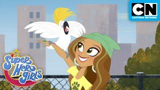 Dexter the Cat | DC Super Hero Girls | Cartoon Network