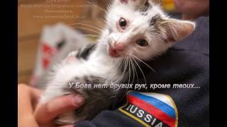 Спасённые животные и их загородная обитель Приют Новосибирск