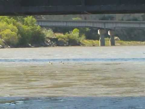 Urban Fishing USA: Yellowstone River Billings, Montana