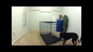 Dog Escapes Kennel