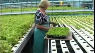 Как сделать зеленый салат