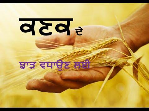 Increase yield of Wheat with ProGibb. (Punjabi) ਕਣਕ ਦੇ ਵੱਧ ਉਤਪਾਦਨ ਲਈ ਢੰਗ