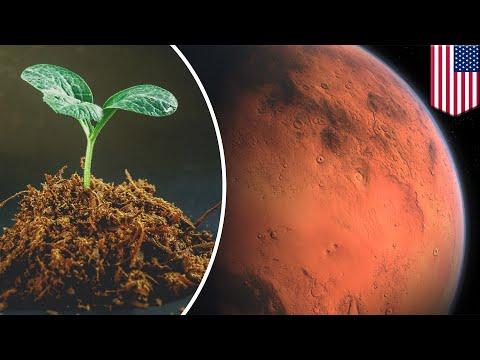 Tanaman Super Yang Hasilkan Materi Nano Dapat Tumbuh Di Mars - TomoNews