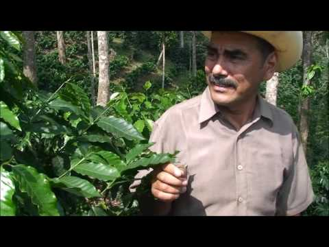 Cafe en Honduras