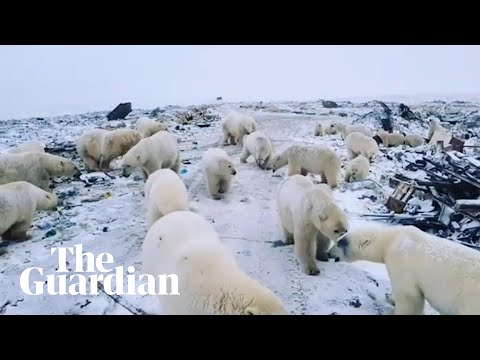The Wake Up Show - Parents In Russia Scared To Send Kids To School After Polar Bear Invasion