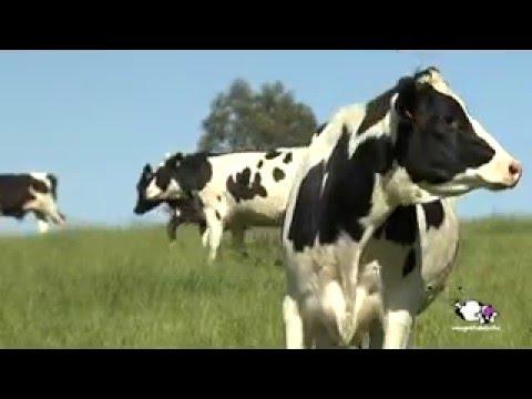 Vídeo proceso de producción de la leche