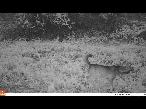 الحياة البرية بسلطنة عمان - ظفار Wildlife in oman - Dhofar 2