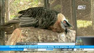 В зоопарке Шымкента поселилась редкая птица