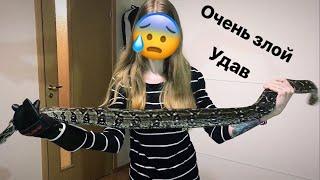 Самая злая змея (императорский удав)