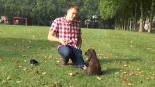 Dog School: Clicker aanleren bij de hond.