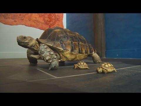 Sea Quest Aquarium - Quebec Canada - Alternative S'mores - Exploring Iceland
