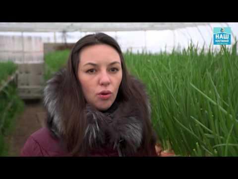 Видео НАШ КОСТАНАЙ выращивание лука, теплица, цветы, петунии, наш костанай, бизнес идея, дача, зелень, ово