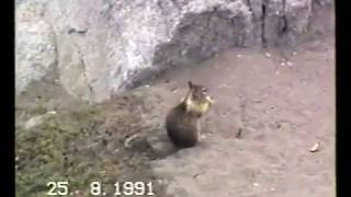1991 - Foche e scoiattoli sulla costa californiana (seals  & squirrels) animali #supergreen