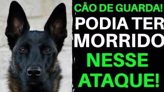 Cão de Guarda PODIA TER MORRIDO NESSE ATAQUE! |Cães de Guarda | Cão de Guarda |Pastor Belga Malinois