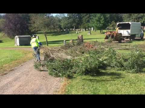Trimming trees at Greenwood Cemetery