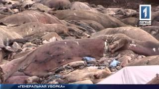 видео генеральная уборка в Белгороде
