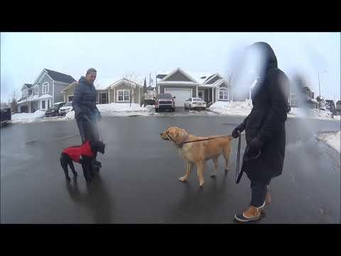 burton fake dog humor