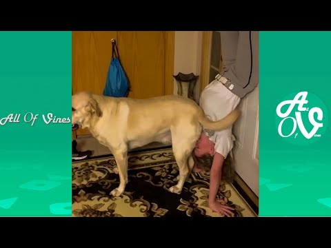 Try Not To Laugh Watching Funny Animal Videos  Funny and Silly Animals 2021 7
