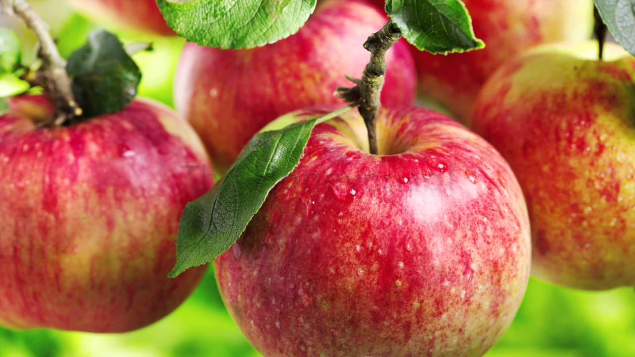 All About The Honeycrisp Apple - The Fruitguys