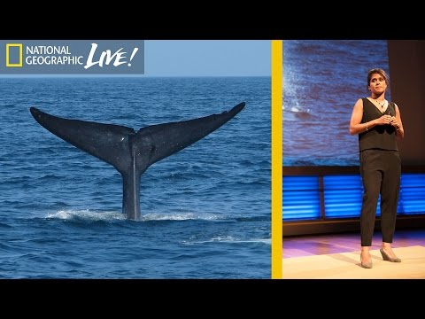 How Finding Blue Whale Poop Changed My Life | Nat Geo Live