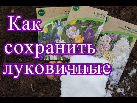 заказать луковицы цветов+ - YouTube