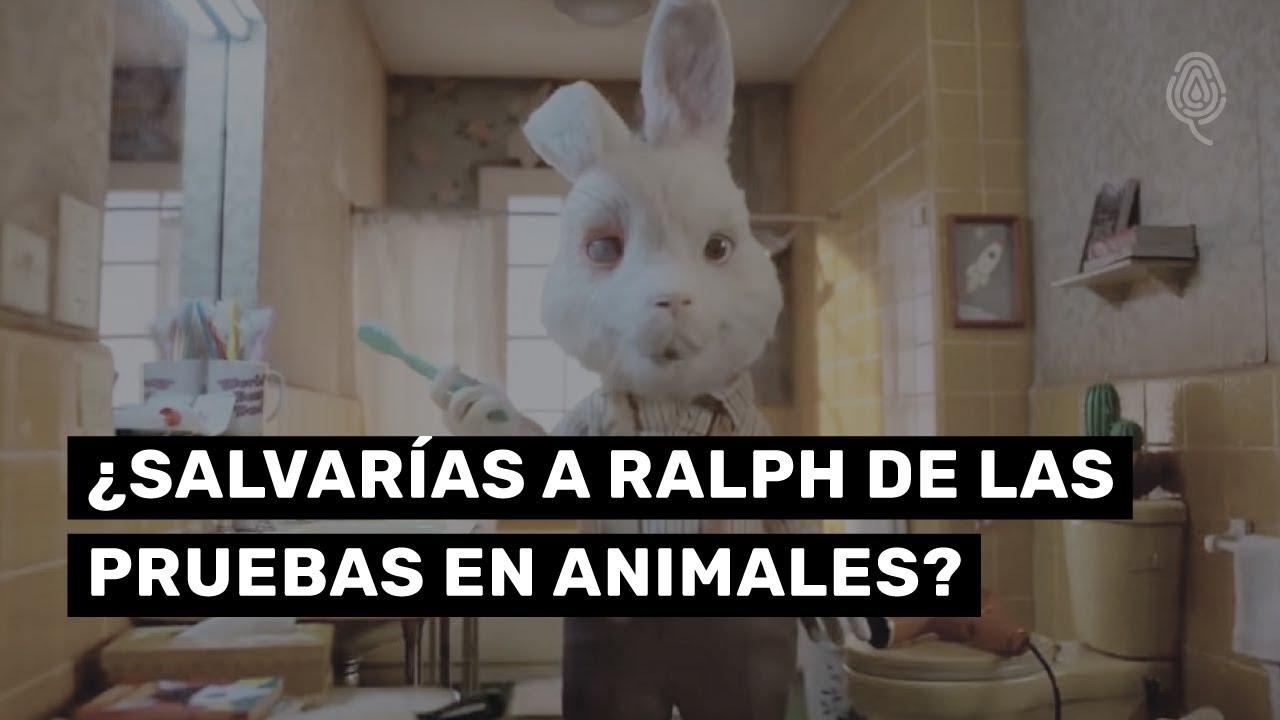 Save Ralph | ¿Cómo salvar a este conejo de las pruebas en animales?