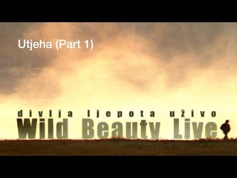 Montenegro Wild Beauty Live | Divlja ljepota uživo | Utjeha - Part 1 (Prvi dio)