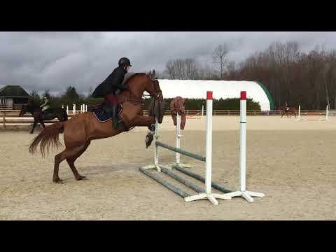 2017 Equestrian Fails Compilation