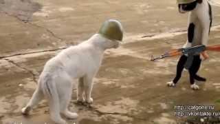 драка котов со смешными вставками. ржач