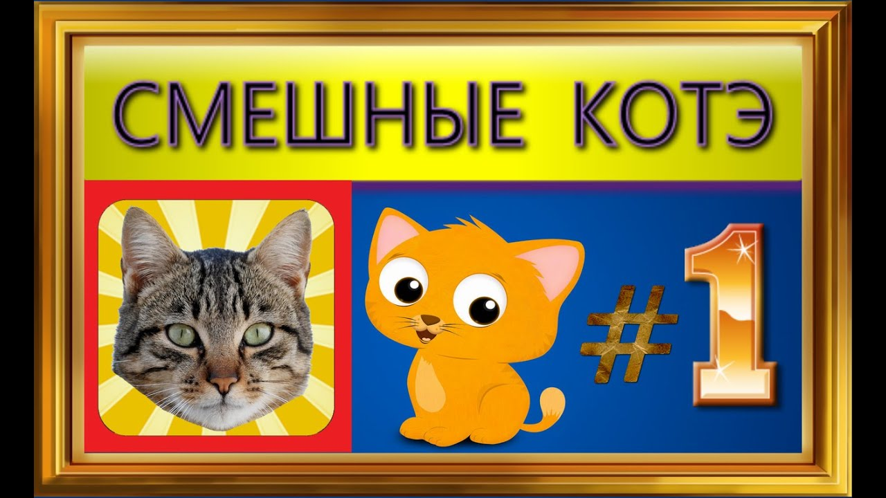 СМЕШНЫЕ КОТЭ #1 (Анекдоты, картинки, приколы про котиков ...