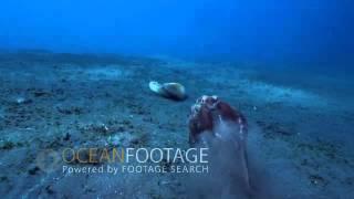 Ocean Footage: Coconut Octopus Attacks Crab