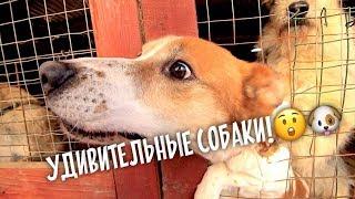 Собаки Терминатор и Малыш! Волонтерим в приюте.