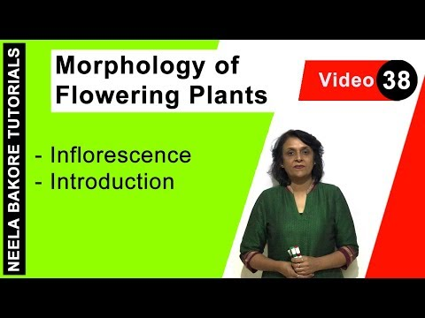 Morphology of Flowering Plants - Inflorescence - Introduction