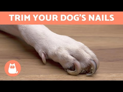 How to Trim Your Dog's Nails at Home  STEP BY STEP WITH TIPS