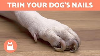 How to Trim Your Dog's Nails at Home 🐶 STEP BY STEP WITH TIPS