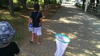 家の近所で・・・虫取りです^^ 猛暑のせいなのか~バッタとかは例年よ...