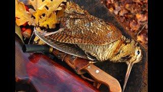 Закрытие охоты на Вальдшнепа охота на вальдшнепа весной