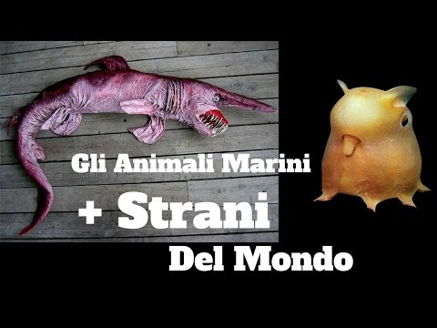 Top 10 Misteriose Creature Marine 💦