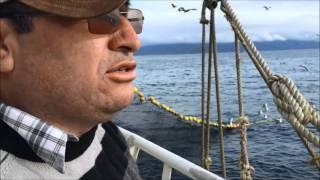 Pesca cerco Valdivia  Isaac II