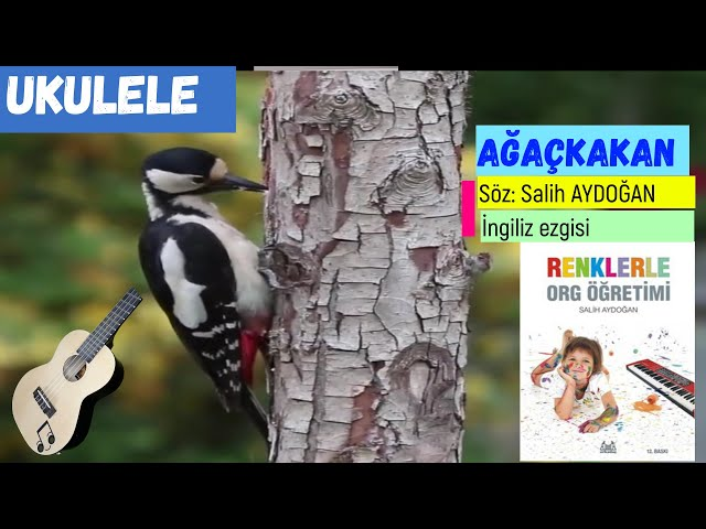 UKULELE AĞAÇKAKAN ŞARKISI (Fa,sol,la) Solo, Akor,  Ritm