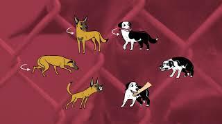 Dog Body Language 101