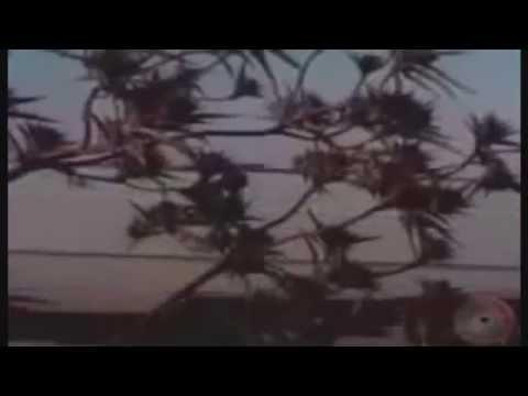 streamline - newton HD