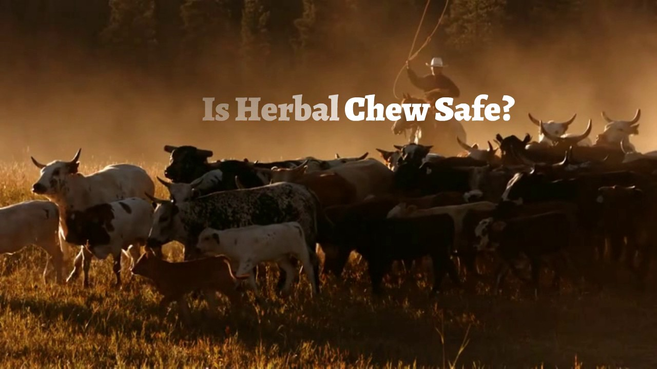 elicit herbal chew alternative chewing tobacco - youtube