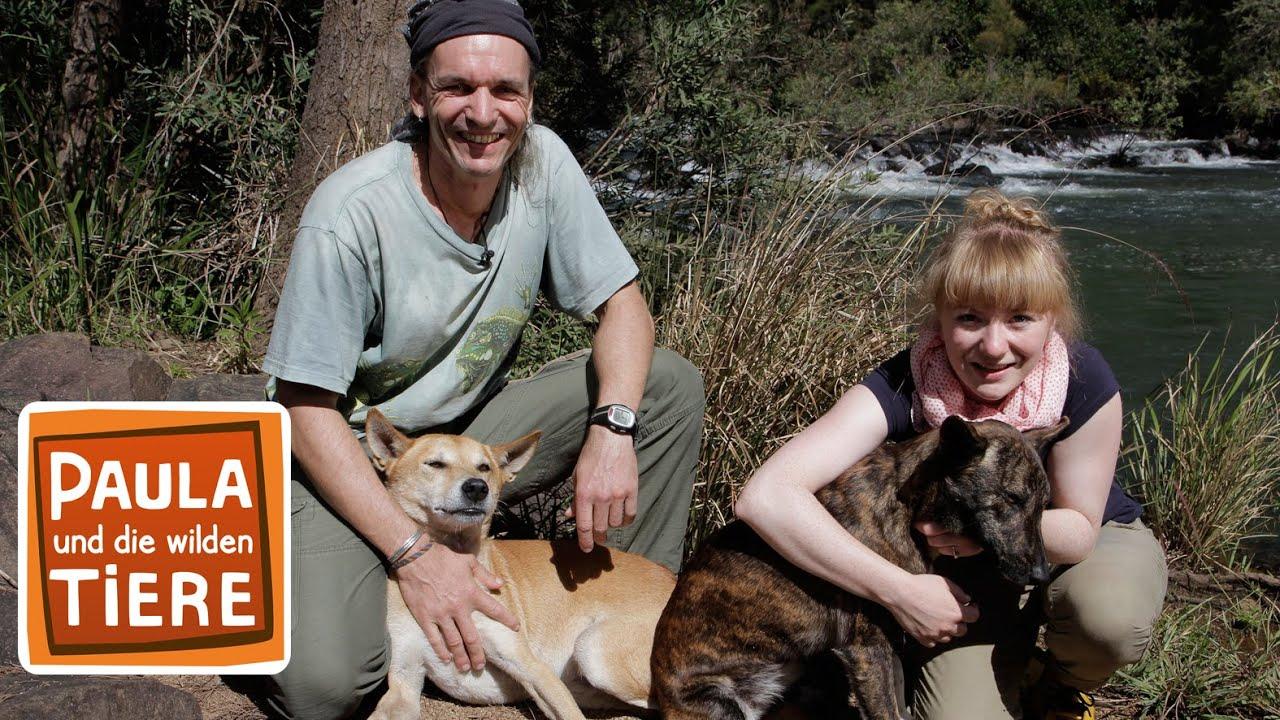 Wer Ist Der Oberste Dingo Doku Reportage Fur Kinder Paula Und Die Wilden Tiere Youtube