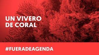 VIVEROS DE CORAL PARA SALVAR LOS ARRECIFES | Fuera de Agenda | LAB